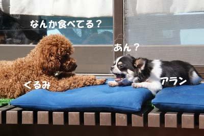 食べてる?