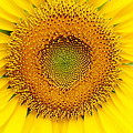 Photos: 黄色~花粉がいっぱい