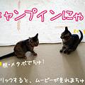 Photos: 【猫ムービー】キャンプインにゃ!
