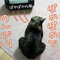 Photos: 081218-ぽかぽかでのんびりにゃ~♪
