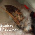 Photos: 090205-セミさんにゃ~!