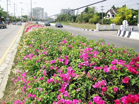 花いっぱいのチェンマイ(9) DSCN4902_R