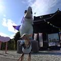 Photos: 幸福を呼ぶゾウ~長福寿寺