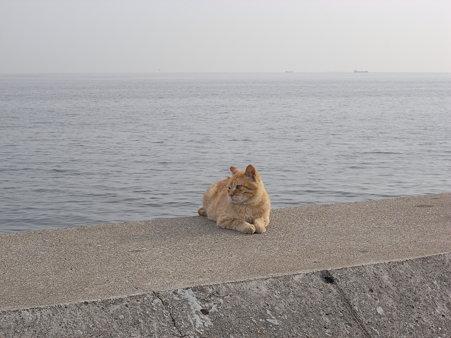 風を見ていた猫
