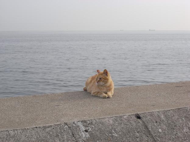写真: 風を見ていた猫