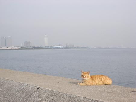 幕張副都心と猫