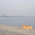 写真: 幕張副都心と猫