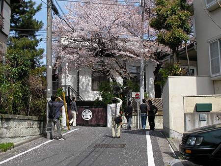 桜を見に行く