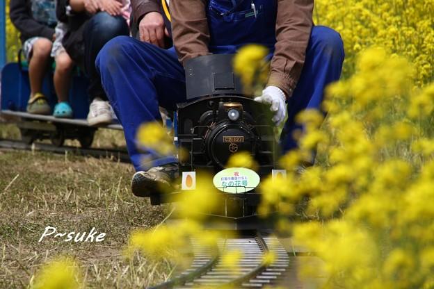 菜の花SL