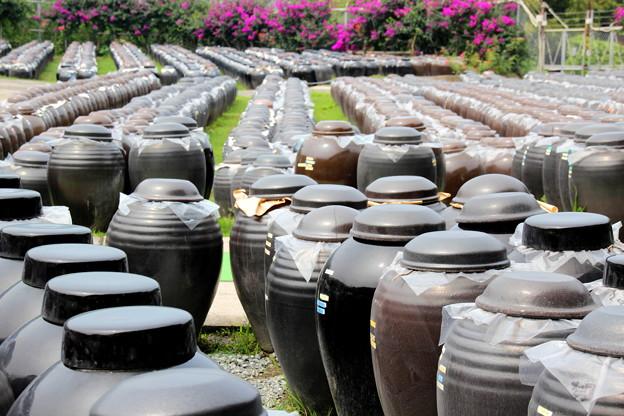 黒酢の壺畑