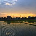 写真: 初夏の田んぼと夕焼け - 1