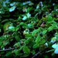 Strawberry Fields.......