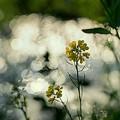 Sun sun sun ~♪♪.......