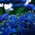 シベ達のお花畑