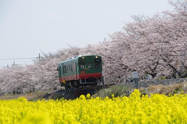 写真: 春うらら