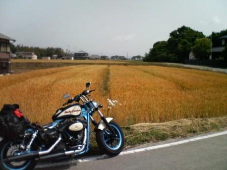 20070526_1,300kmひとり走り_0925_これは、麦畑?
