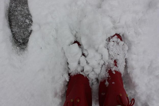 おまるザウルスの赤い靴