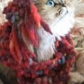 猫猫な日々