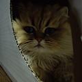 Photos: 箱入り娘