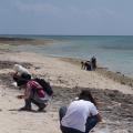 写真: カイジ浜で必死に星の砂拾い(竹富島)