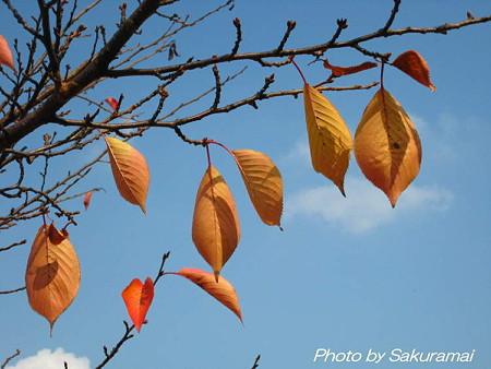 晩秋の葉の光