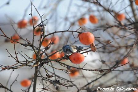 柿木の鳥・・・美味いなぁ