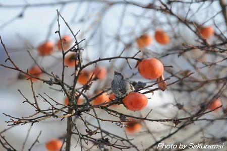 柿木の鳥・・・満足