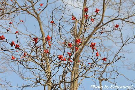 冬の赤い花は?