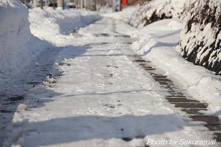 雪の散歩道