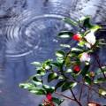 写真: 宝泉院の池