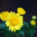 Photos: 黒と黄色