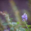 Photos: 小さい花