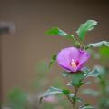 Photos: 扉の中の花