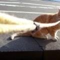 Photos: 飼い猫