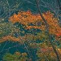 Photos: 川と紅葉