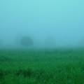 写真: 朝霧の草原
