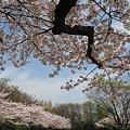 Photos: 亀戸中央公園