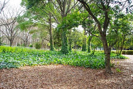 庄内緑地公園その4