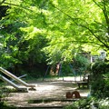 新緑_杉村公園12