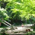 新緑_杉村公園11