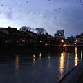 写真: 浅野川(中の橋) カラス