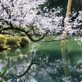 写真: 兼六園・瓢池に映るさくら