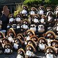 写真: 陶芸の里 信楽焼き 狸