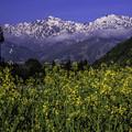 写真: 後立山展望