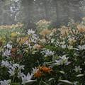 Photos: 霧の花園