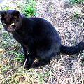 写真: 水門猫さん(K3100776)