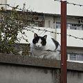 Photos: 水門猫さん(R0010179)
