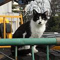 写真: 水門猫さん(R0012351)