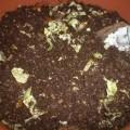 Photos: 植木鉢で生ゴミ処理ー1