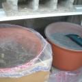 Photos: 温室に入れた生ゴミ植木鉢